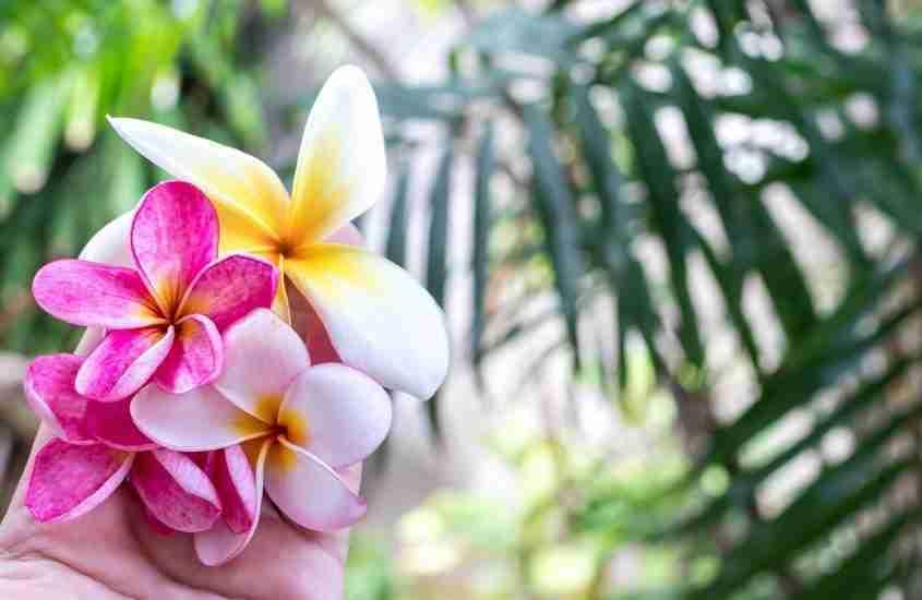 Bali Healers: My First Balinese Healing Experience