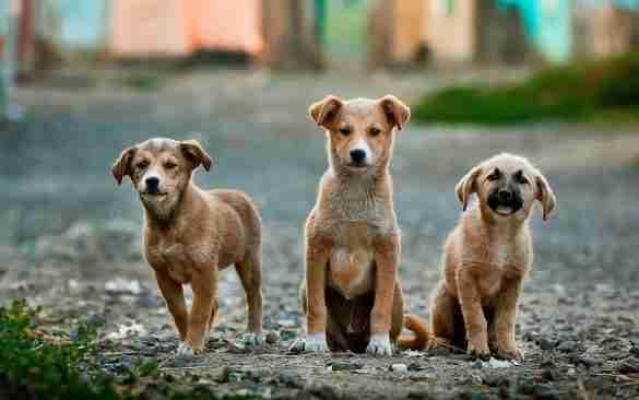 saving-stray-animals-bali
